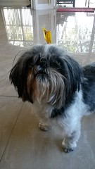 Pets 720x1280-005