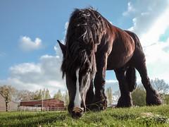 Black is Back - horsy pics