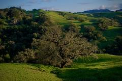 Bald Hills Ranch