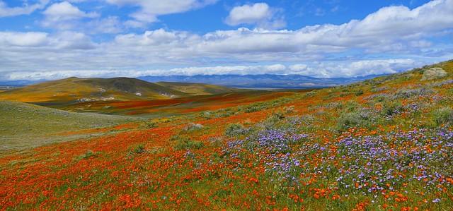 Antelope Valley Poppy Reserve 2nd Edit