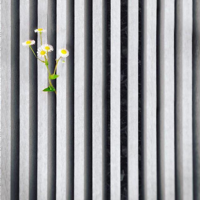 忍不住 #enlight #flowers #snapshots_daily