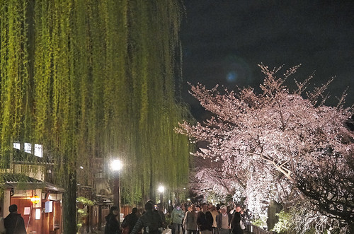 【写真】2014 桜 : 祇園白川/2020-09-13/IMGP5576
