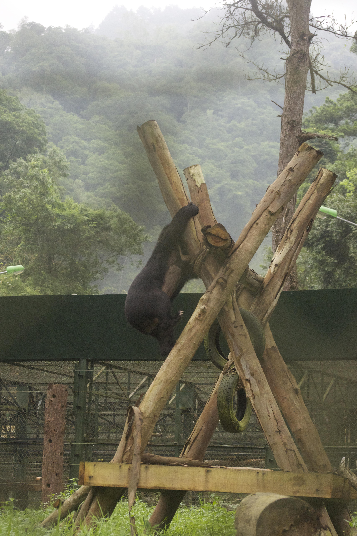 James climbing