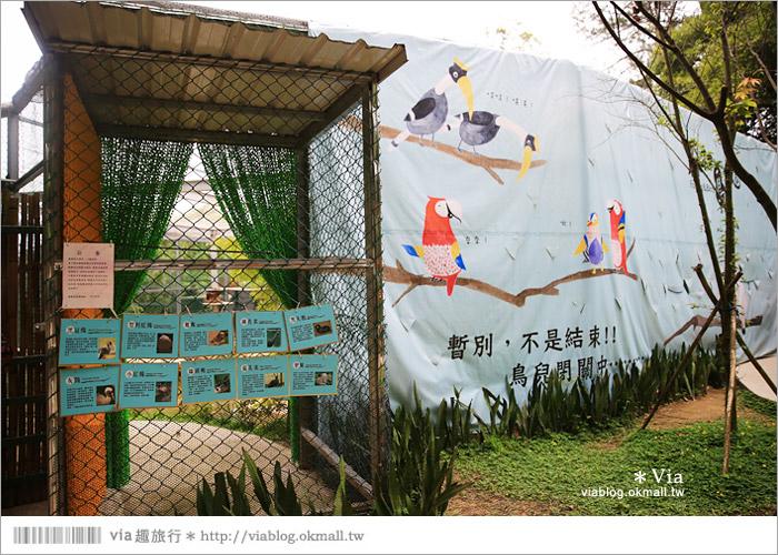【新竹景點推薦】森林鳥花園~親子旅遊的好去處!在森林裡鳥兒與孩子們的樂園59