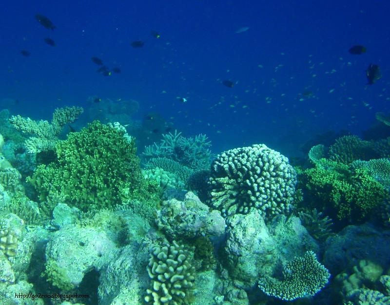 Домашний риф Fihalhohi
