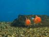 tropical-fish-coral-custom-tank-aquarium-sarasota-fl-12