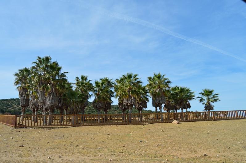 lara-vazquez-madlula-blog-oasis-safari