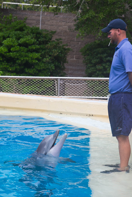 Dolphin Cove at SeaWorld