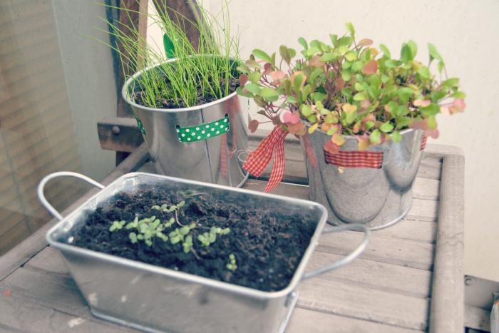 balcony garden glasgow