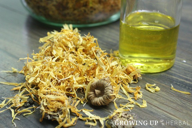 Learning Herbs: June Herb Challenge – Week 1 | GrowingUpHerbal.com | Primary Actions of Calendula, Calendula Infused Oil
