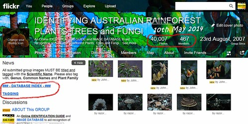 40,000 Images, 10th May 2014 - IDENTIFYING AUSTRALIAN RAINFOREST PLANTS,TREES and FUNGI Flickr Group