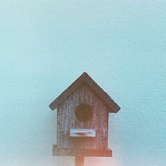 The bird house #analog #film #xprocess