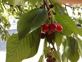 Mermelada de Cereza y Naranja