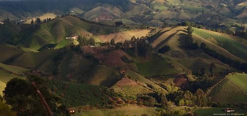sunset rural atardecer campo cultivo agro agricultura potreros