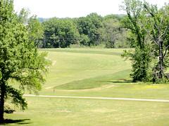 grass, golf course, lawn, pasture, grassland,