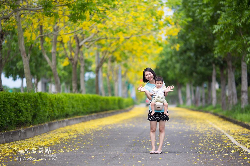 台南私藏景點--高鐵阿勃勒 (9)