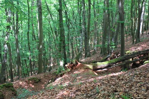 Forests at Haard, Luxembourg
