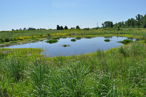 Swales, like this one, were created throughout the wetland to hold water after a rain event, which in turn helps aid in flood storage, enhances plant diversity and provides habitat for wildlife. NRCS photo.