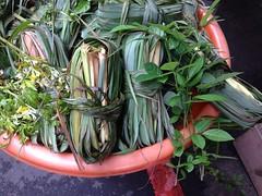 艾草可以驅蟲防蚊,用艾草包煮開的水泡澡香氣滿室。