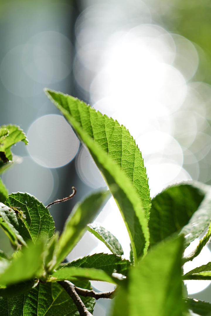 leaf-green