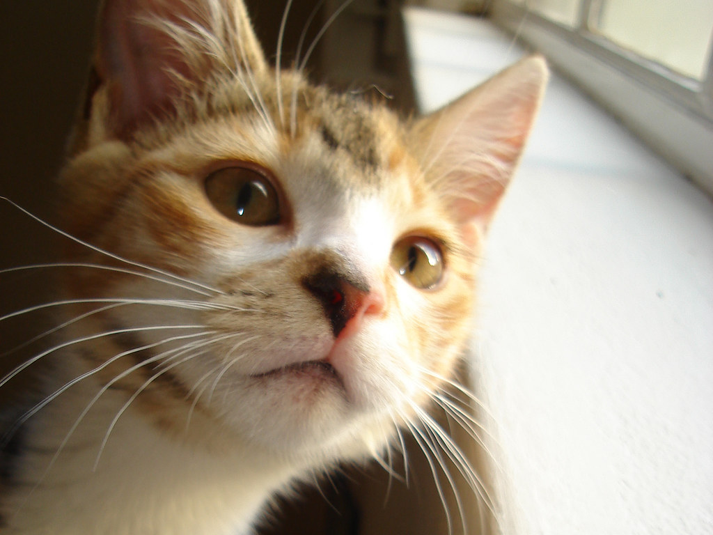 foster kitten Leccy