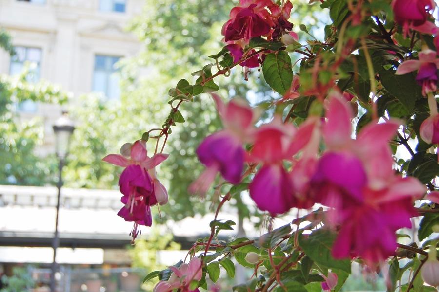 Marché aux fleurs (13)