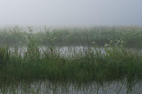 morning flowers summer water fog landscape geotagged slovenia slovenija notranjska cerknicalake cerkniškojezero intermittentlake presihajočejezero