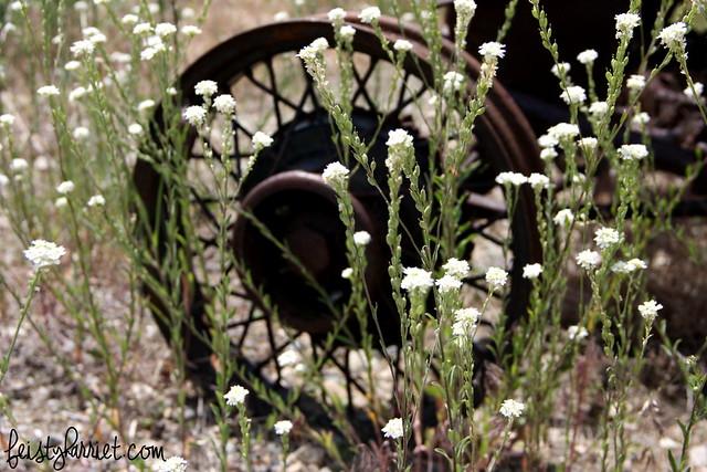 Montana Elkhorn Ranch 3_feistyharriet_July 2014