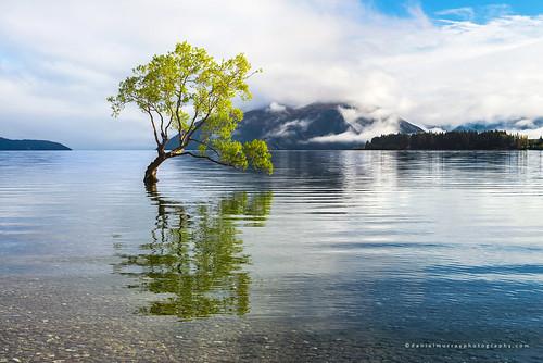 morning newzealand cloud mountain lake reflection tree water landscape scenery willow nz wanaka