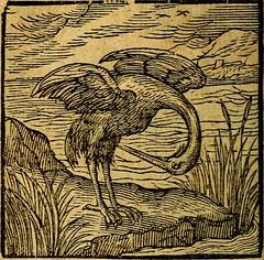 "Image from page 109 of ""Emblemata V.C. Andreae Alciati Mediolanensis iurisconsulti : cum facili & compendiosa explicatione, qua obscura illustrantur, dubiaq́ue omnia soluuntur,"" (1622)"