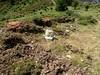 Sentier de la crête Vaccia - Cavalletti : balise jaune