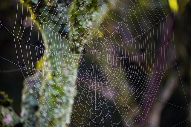 A Teia - Cobweb