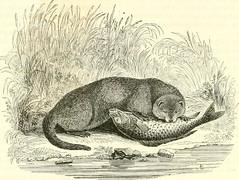 """Image from page 157 of """"Le Jardin des plantes : description"""" (1851)"""