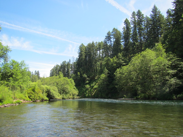 Mckenzie and willamette river fishing report the caddis for Mckenzie river fishing