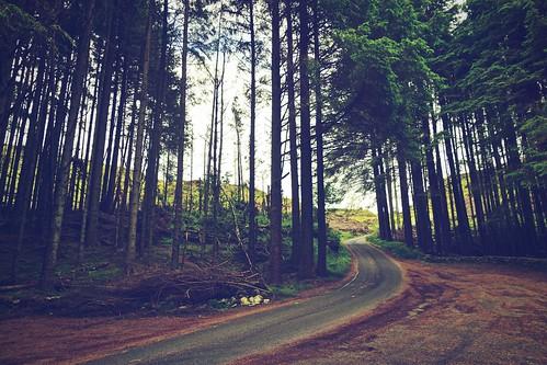 road trees ireland forest dark way drive mood path slievegullion