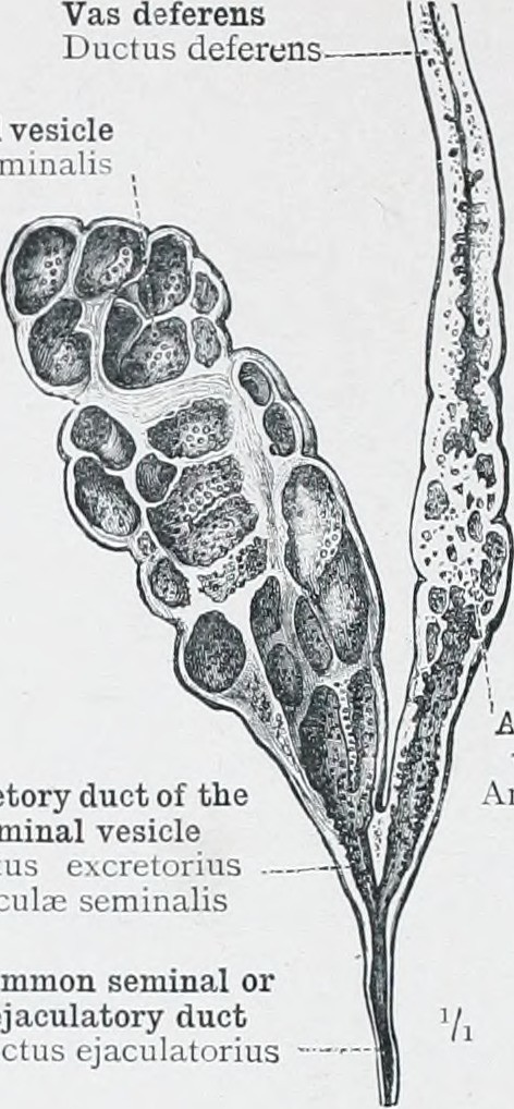Image From Page 109 Of An Atlas Of Human Anatomy For Stud Flickr