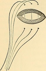 "Image from page 941 of ""The principles and practice of surgery"" (1872)"