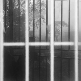 #spring #foggymorning #cold #reflection #nature #trees #blackandwhite #monochrome #backtowinter #feelslikewinter