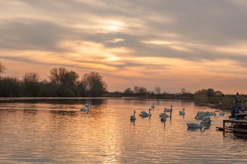 pond sunset swans 50mmprimelens canon400d