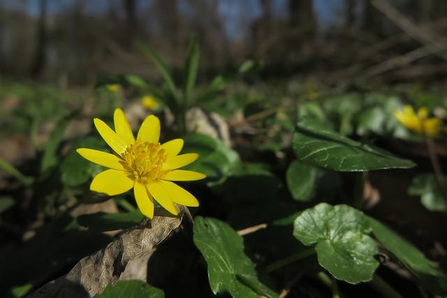 Frühling im Wald, Canon POWERSHOT G1 X MARK II