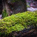 Spring Moss by nestorphotography