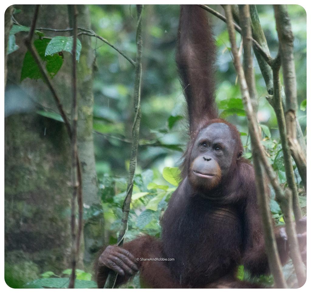 Borneo-20170413-IMG_7946
