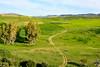 Chemin entre les champs