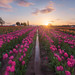 Tulipfest by terenceleezy