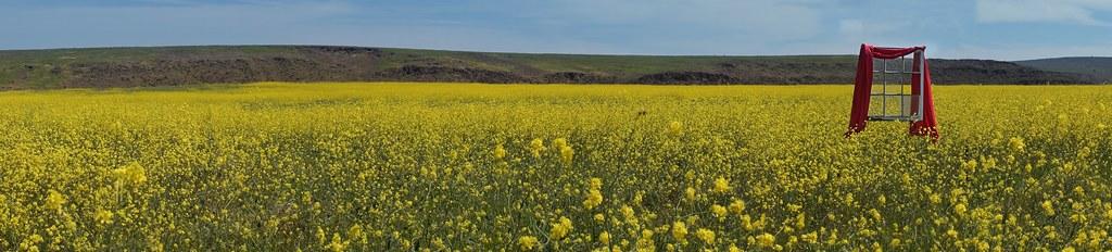 Endless field of wildflowers