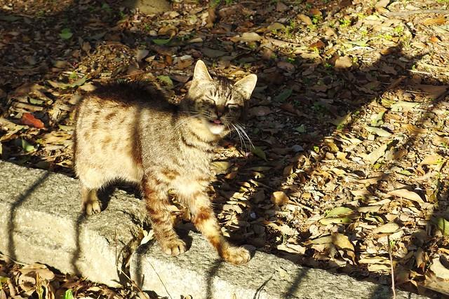 Today's Cat@2017-04-23