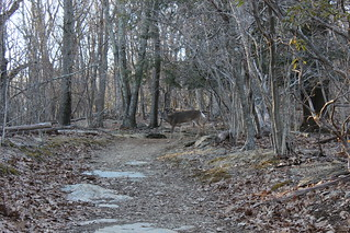 Shenandoah National Park - Whiteoak Canyon Trail - Deer Crossing | by Vicky TGAW