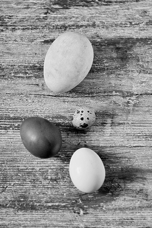 four eggs© by Haalo