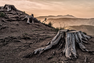 stumps at sunset, marin headlands
