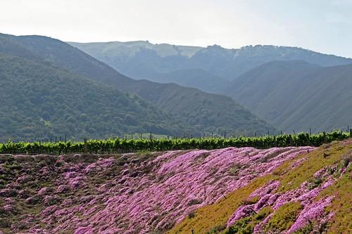california salinas winery carmel talbottvineyards